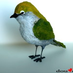 White-Eyes-Bird