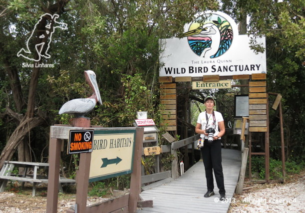 The Laura Queen – Wild Bird Sanctuary