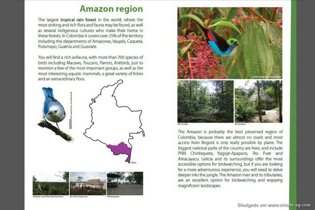 Guide-birdwatching_Colombia-2