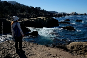 Point-Lobos_nature_01