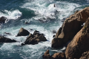 Point-Lobos_nature_04