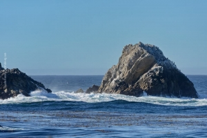 Point-Lobos_nature_05