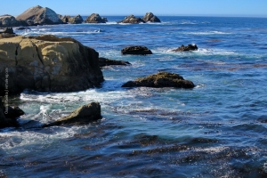 Point-Lobos_nature_28