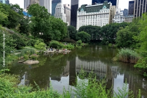 Central-Park_july-nature_05
