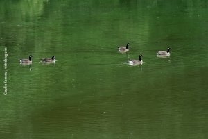 Central-Park_july-nature_33