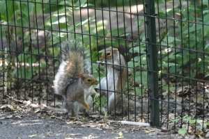 Central-Park_july-nature_34