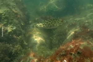 Fishwatching_Paraty_nov17_22
