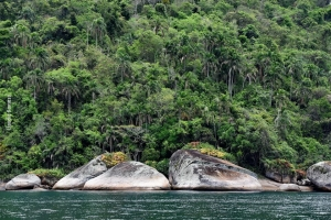 Fishwatching_Paraty_nov17_53b