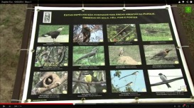 Eu Divulgo: Birdwatching no Parque Ecológico do Tietê – SP, no Repórter Eco, da TV Cultura, mar/14