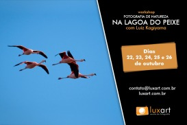 Eventos: Workshop de fotografia na Lagoa do Peixe – RS, 23-26 out/14, por Luxart