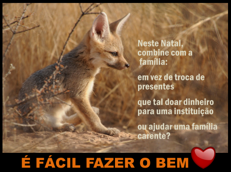 Cape Fox – África do Sul